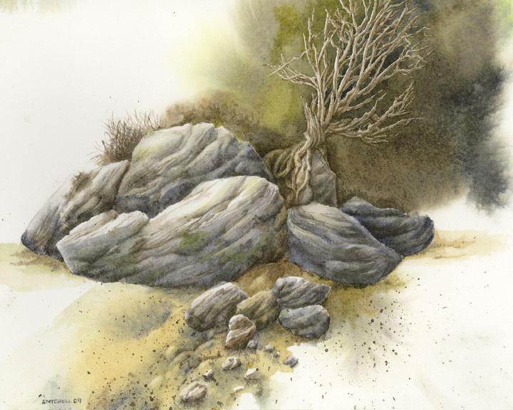 rock_tree_study
